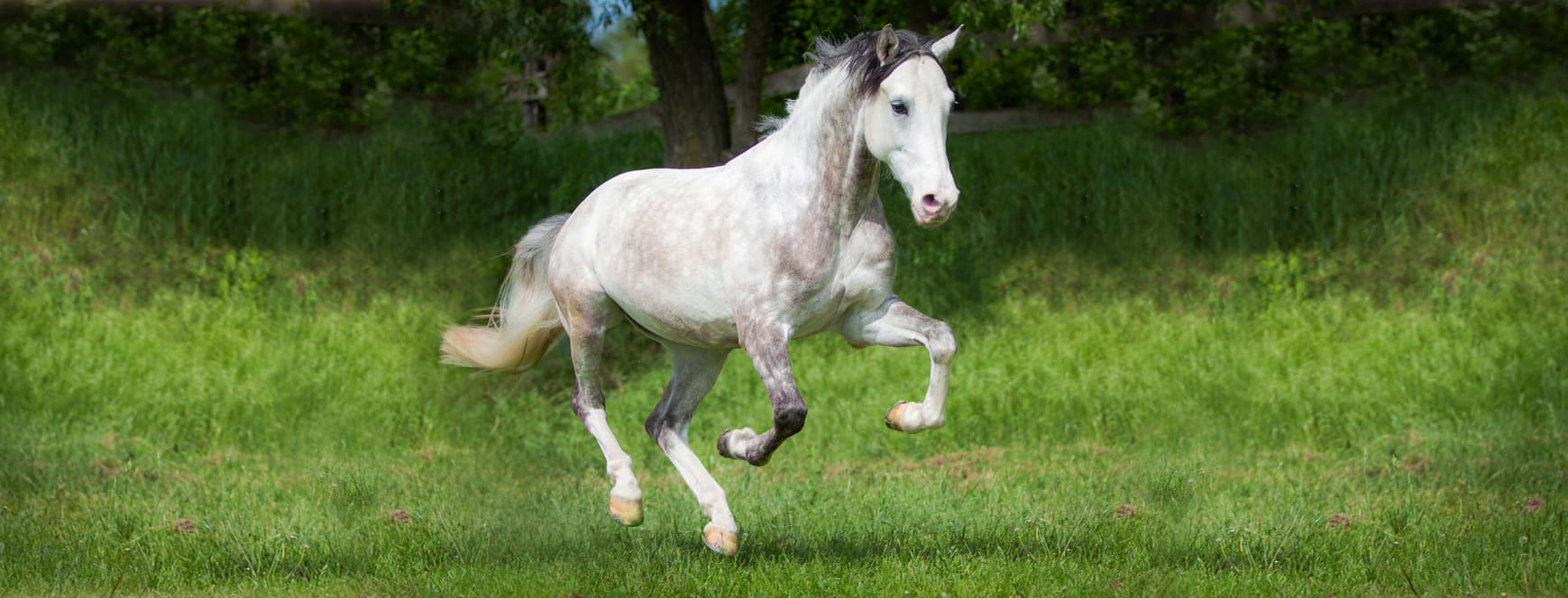 horse-bedding-boxengold-premium-ecostreu
